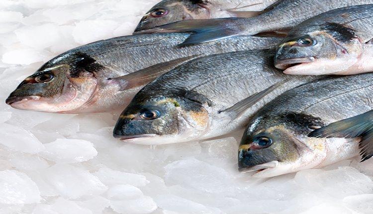 تشخیص ماهی تازه از کهنه با 8 روش ساده