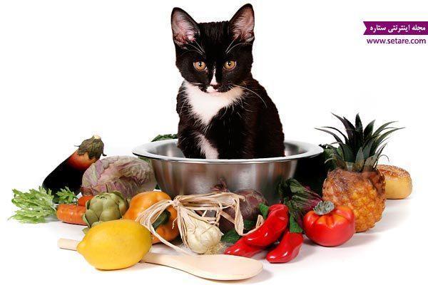 غذای گربه و بچه گربه چیست؟