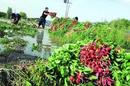علت افزایش قیمت سبزی