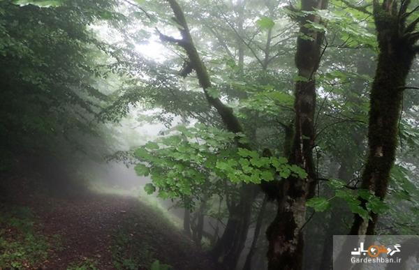 جنگل دیا؛جنگلی بکر و ترسناک در مازندران